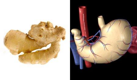 Продукты и части тела