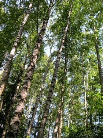 Целительная Сила Древа