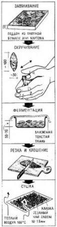 История забвения «Иван-чая» и замены его на Руси иноземным чаем