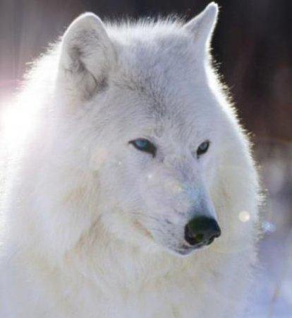 Путь Белого Воина