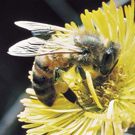 Держать пчел или водить. Конструкция улья для очень занятых или ленивых