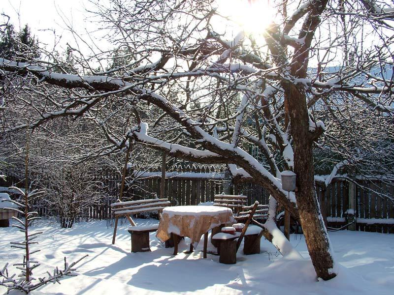 Зимние работы в саду и дома