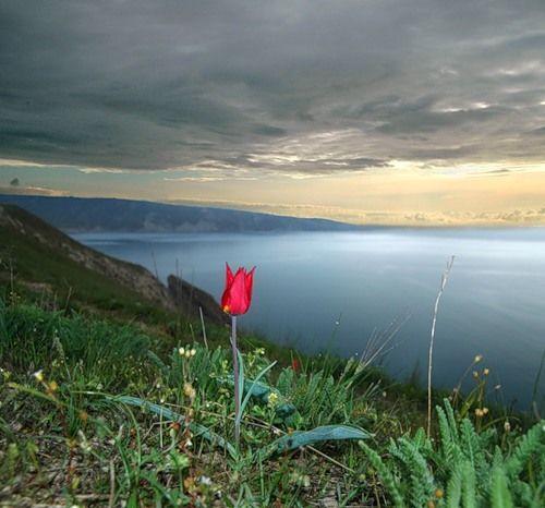 Фото один красивый цветок в мире