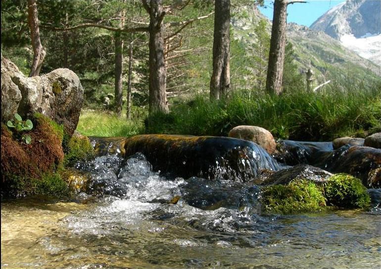 Жизненная Сила Воды