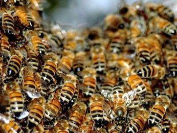 Можно восхищаться пчелами, их слаженностью и усердием.