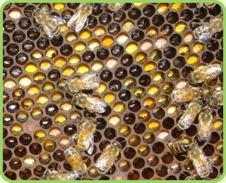 Пчёлы в жизни наших Предков