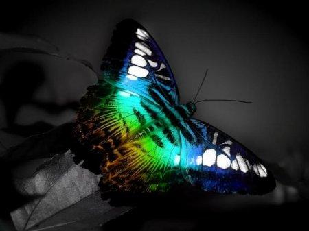 Эффект бабочки в нашей жизни.