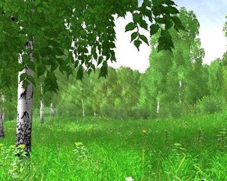 Дерево - Целитель. Часть 1.