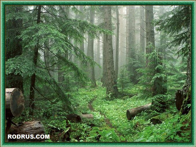 Деревья - Наши Целители
