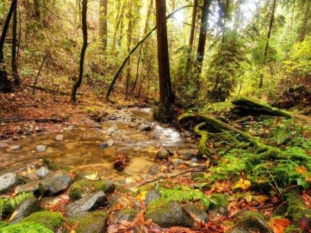 Лес для меня - источник жизни, убежище от цивилизации.