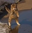 Этот кот был замечен еще в марте, когда только-только