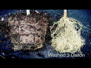 Горшки, стимулирующие рост корней.