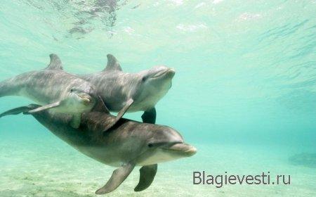 Дельфины, радостные вибрации.