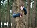 Деревья - наши лекари. Природа - наша поликлиника.