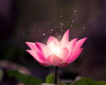 Красота — внутреннее свойство.