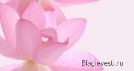 Чем больше в нашем сознании чистоты, тем больше безпредельного Счастья.