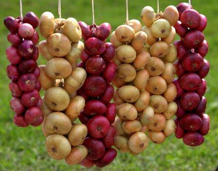 » Лук: о пользе «слезоточивого» овоща