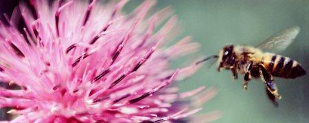 » Пчелиный яд излечивает от болезни Паркинсона