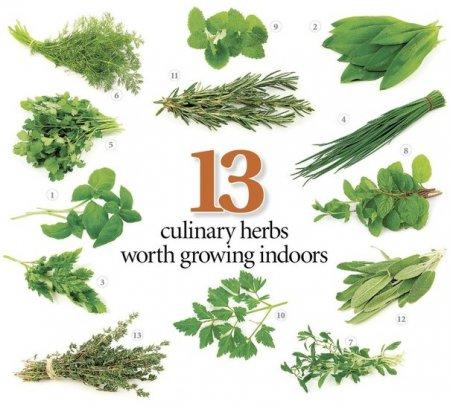 13 пряных тpав, которые мoжно выращивать дома