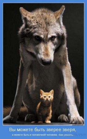 Белорус стал вожаком стаи волков и содержит их на своем подворье