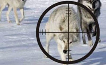 Охотник - убийца!
