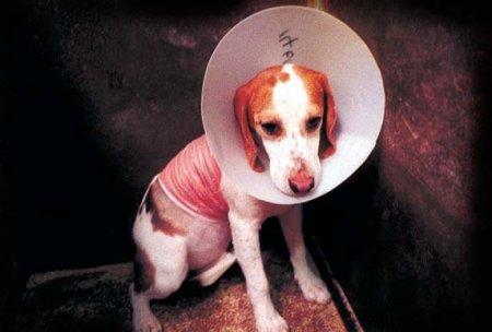 Сбор средств на рекламу в защиту животных.