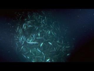 Фильм Планета-океан