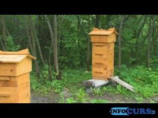 Заводите, люди, пчел.