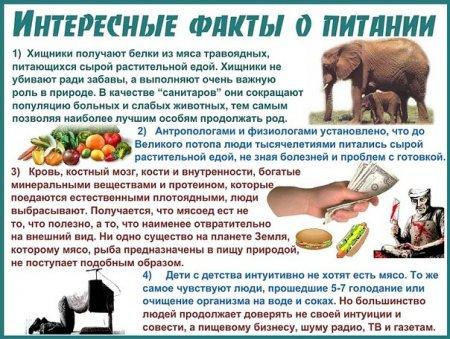 Почему не стоит есть мясо