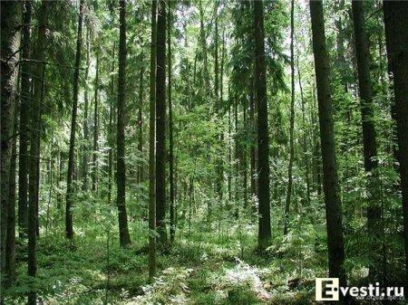 Как выжить, если заблудился в лесу.