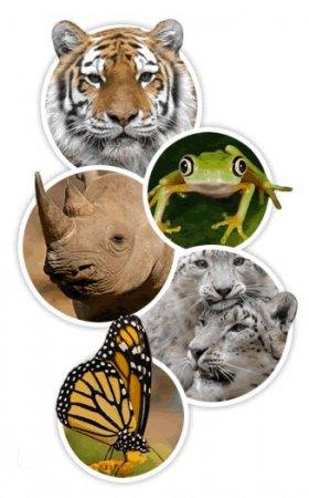 Сохранение биологического разнообразия.