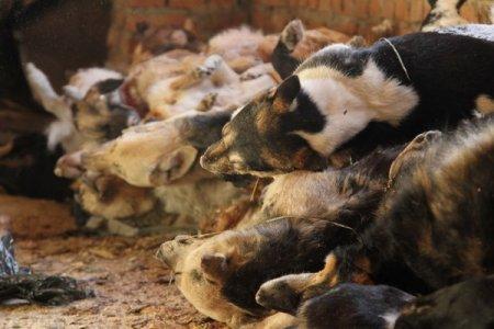 Жизнь без убийства животных