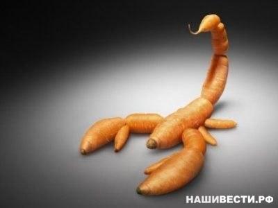 Немного о ГМОГенетически модифицированные организмы