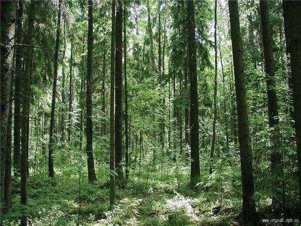 как найти человек заблудился в лесу