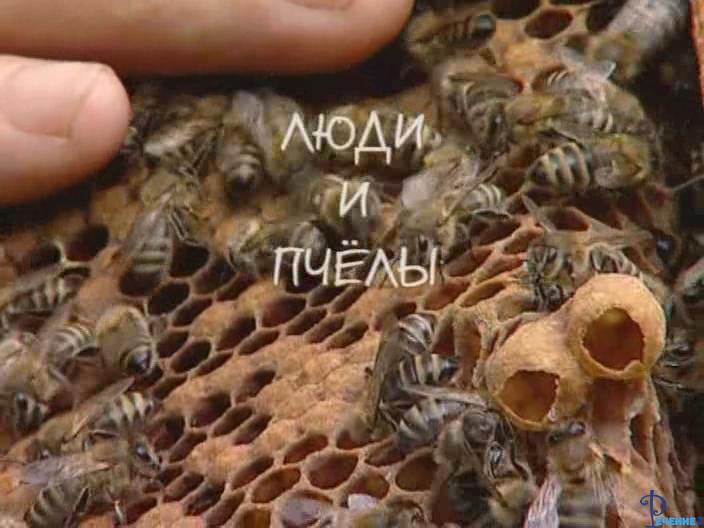 Люди и пчелы