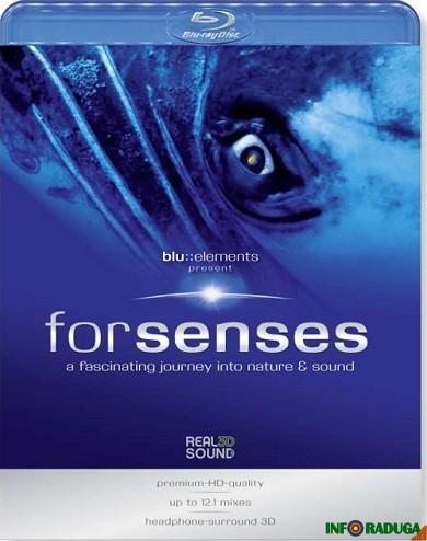 Путешествие в мир природы и звуков / ForSenses : A Fascinating journey into ...
