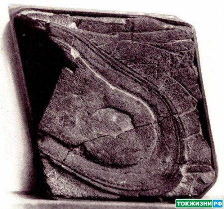 Отпечаток подошвы туфли возрастом 200 млн. лет