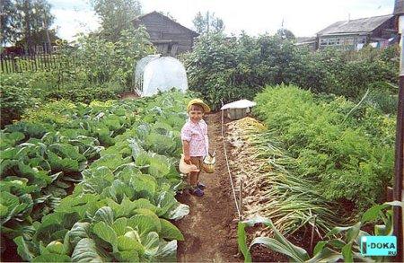 Если растение попало в хорошие условия...