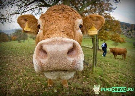 Гуманного мяса не существует!