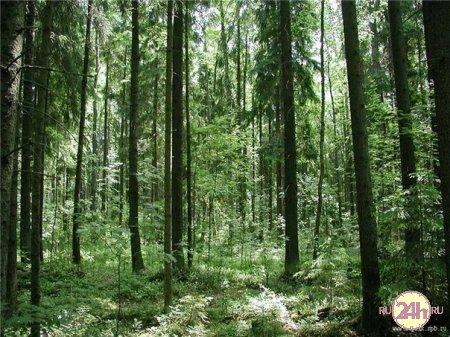 Как выжить, если заблудился в лесу: куда идти, что