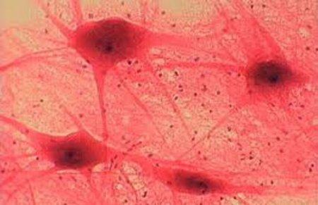 К 20-25 ГОДАМ паразиты побеждают.
