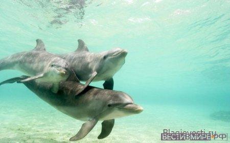 Дельфины... Им известно, что радость повышает вибрации,