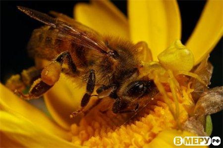 Мёд... При одном упоминании о нём, почему-то хочется