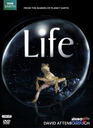 BBC-фильмы серии Жизнь. О приматах.
