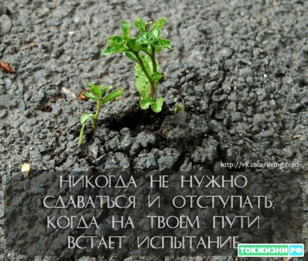 Не сдавайся.