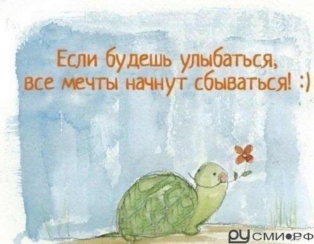 Главное не быть черепахой... ;) ВОЗРОЖДЕНИЕ