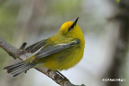 Музыка детям и песни птиц.