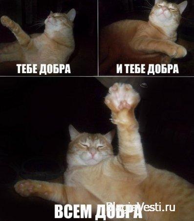 Кот Добряк! Всем Добра...