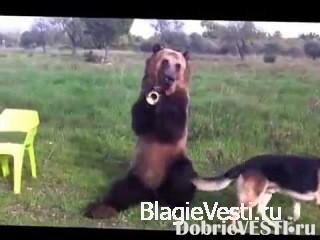 Такого медведя я вижу в первый раз (02:58)Досуг в обычной
