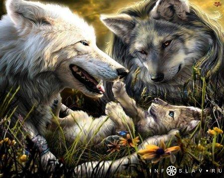 Символы. Волк.